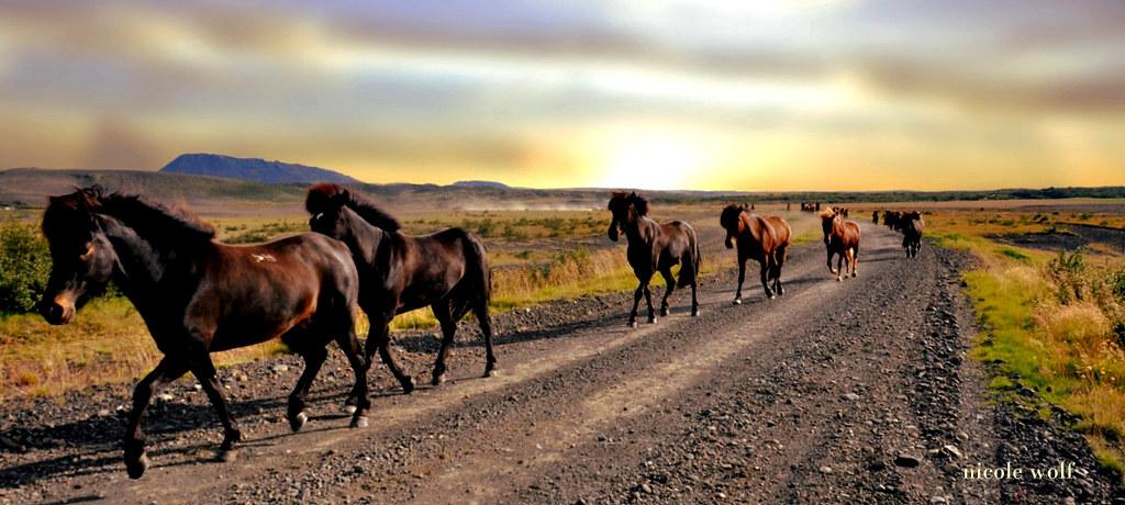 pferdet-1