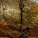Judy Woods-9319 by jackharrybill