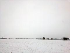 Winter Fields II