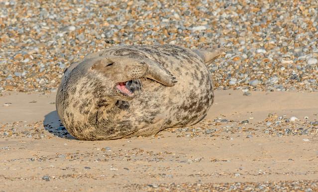 JWL8079 Common Seal..