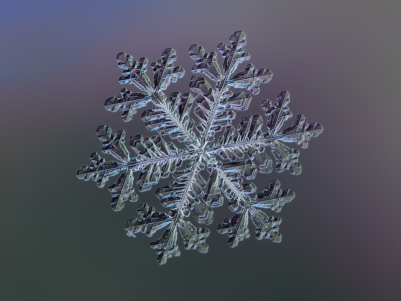 Image of real snowflake: macro photo of big stellar dendrite snow crystal with complex ornate shape, fine hexagonal structure, six elegant arms with many side branches and relief surface. Snowflake glowing on dark blue - green gradient background
