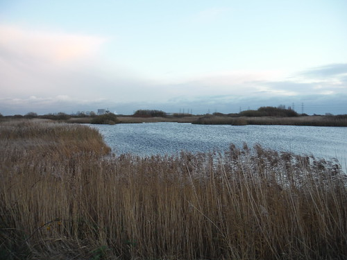 Reed-Ringed Water-Filled Pit, Dungeness RSPB Nature Reserve