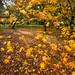 Colour in November
