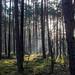 Im Wald 03