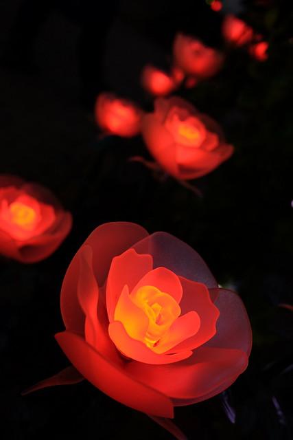 Ashikaga Flower Park Flower Fantasy 2017 115
