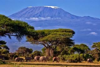 Mt. Kilimanjaro and elephants.