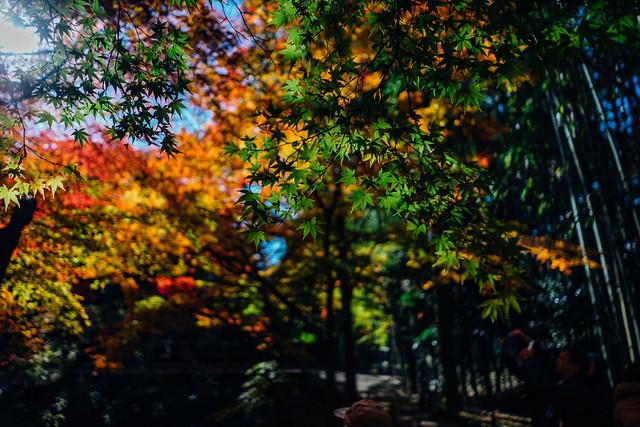 Kyoto_Kitano_08_28mm