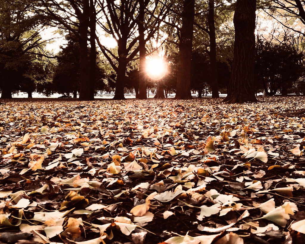 autumn in Yoyogi Park