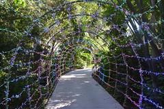 Sarasota, FL - Marie Selby Botanical Gardens - Great Lawn Path