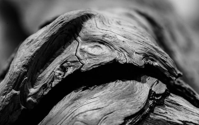 driftwood05a