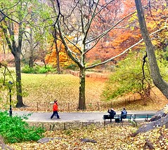 Central Park Autumnal Walk