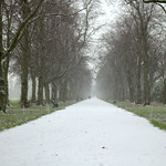 Snowy path at Haslam Park