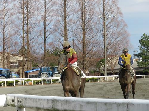 金沢競馬場のレース後に戻ってくる騎手たち