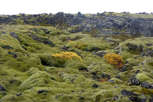 Lava field on the Reykjanes peninsula, Iceland