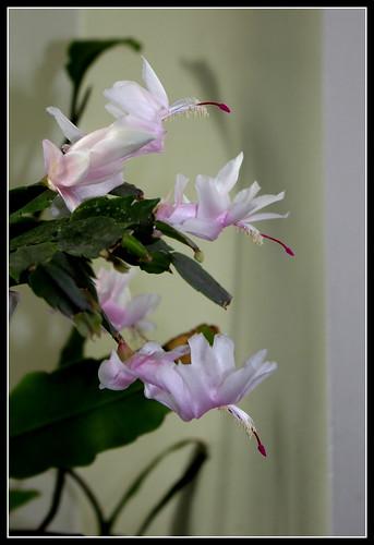 bouquets de souvenirs d'été - Page 3 37593431684_7f60fb3cb2