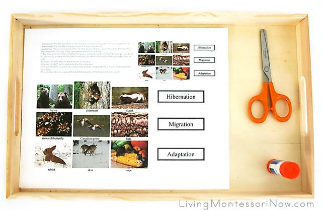 Hibernation, Migration, and Adaptation Activity
