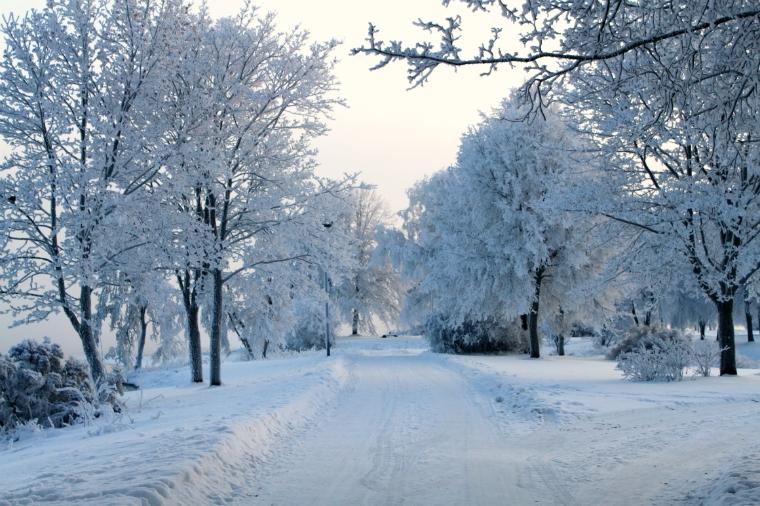 Luminen joulu 2012 5