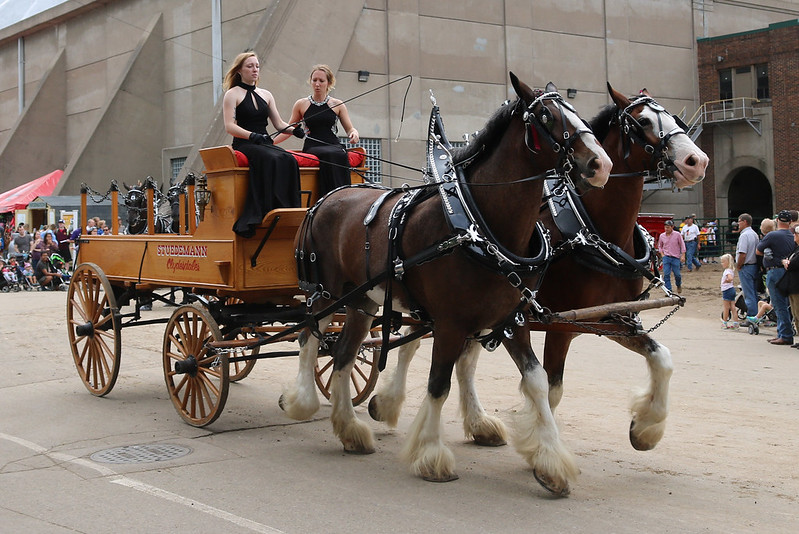 two Clydesdales pulling a wooden trailer with two women in black formal dresses