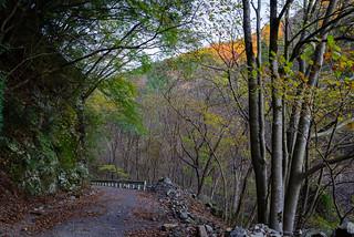 本谷林道・・・この先橋を渡って塩水林道を行く