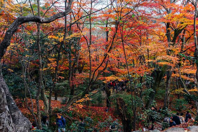 Kyoto_Jyojyakko-ji_06