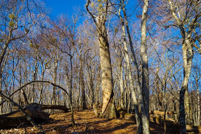 一人、美しい樹林帯を行く