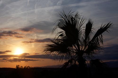 Palm Leaves Sunset