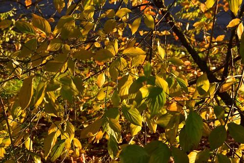 Herbst am Germeringer See