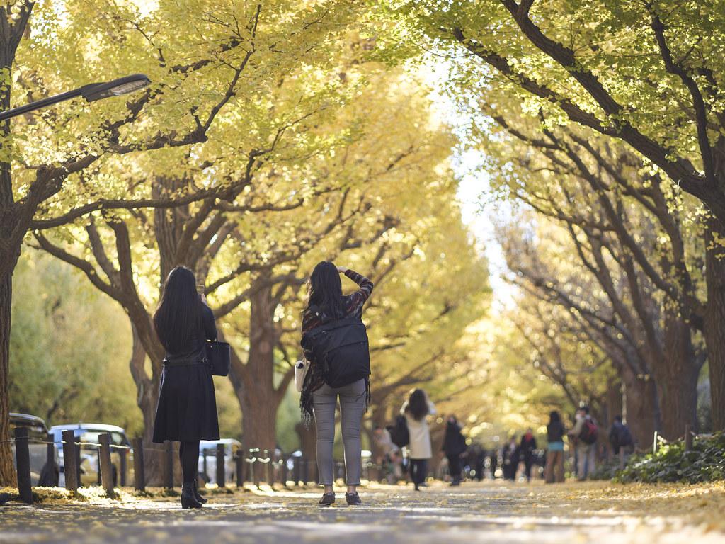 神宮外苑銀杏並木⑦