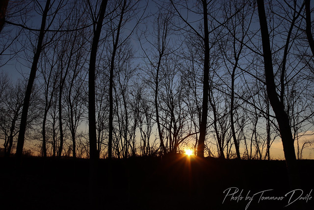 The sun behind the trees.