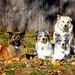 My Herding Advisors by [ lee ]