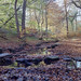 autumn woods near Fulstone