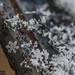 Snow Flakes-4