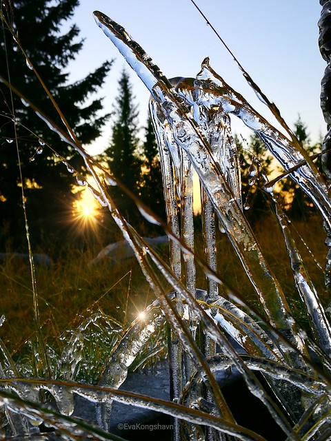 Icy grass for 7dwf Flora