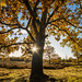 Tree in autumn colors by pDOTeter