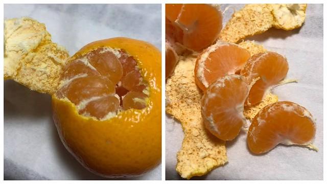 家康手植の蜜柑