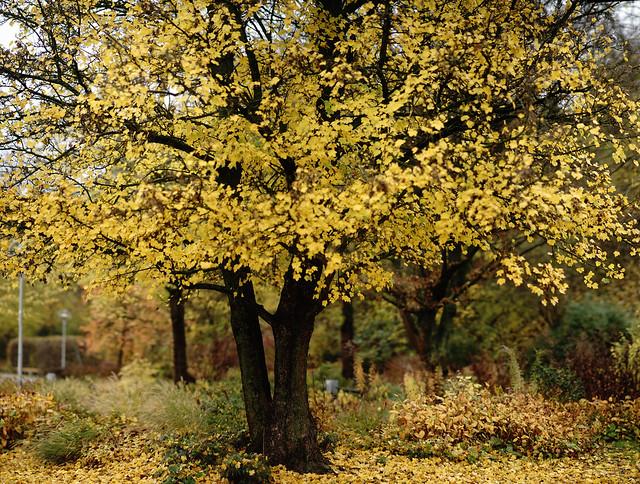 late autumn 2@Südpark, Heilbronn, Germany