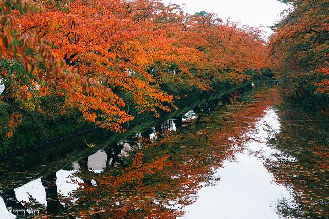 秋色是山巒中的一抹紅 | 17