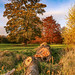 Fallen Trees & Autumn Leaves (Portrait).