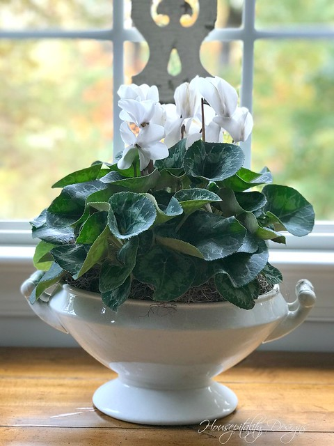 Cyclamen-Housepitality Designs