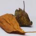 Leaves by Niels J. Buus Madsen