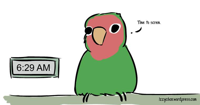 early in the morning time to scream lovebird