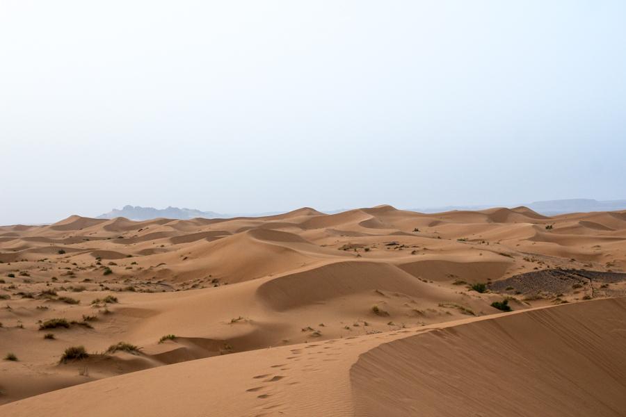 Sahara desert kisses,vera-53