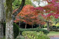 Fall colors at Takano Park