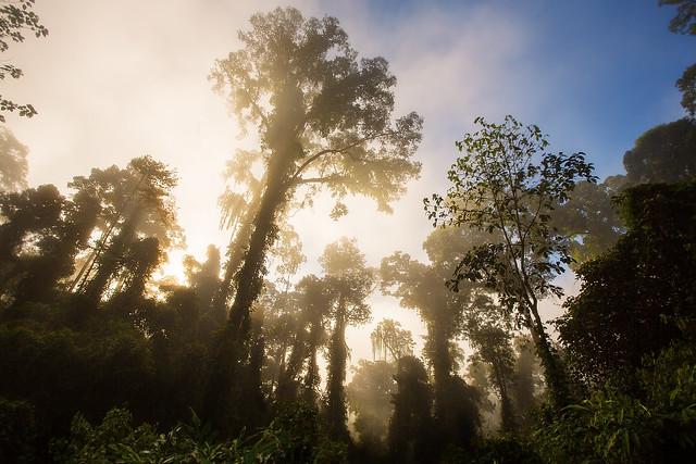 Borneo - Danum Valley at Dawn
