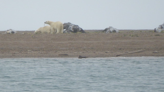 Cross Island Bears