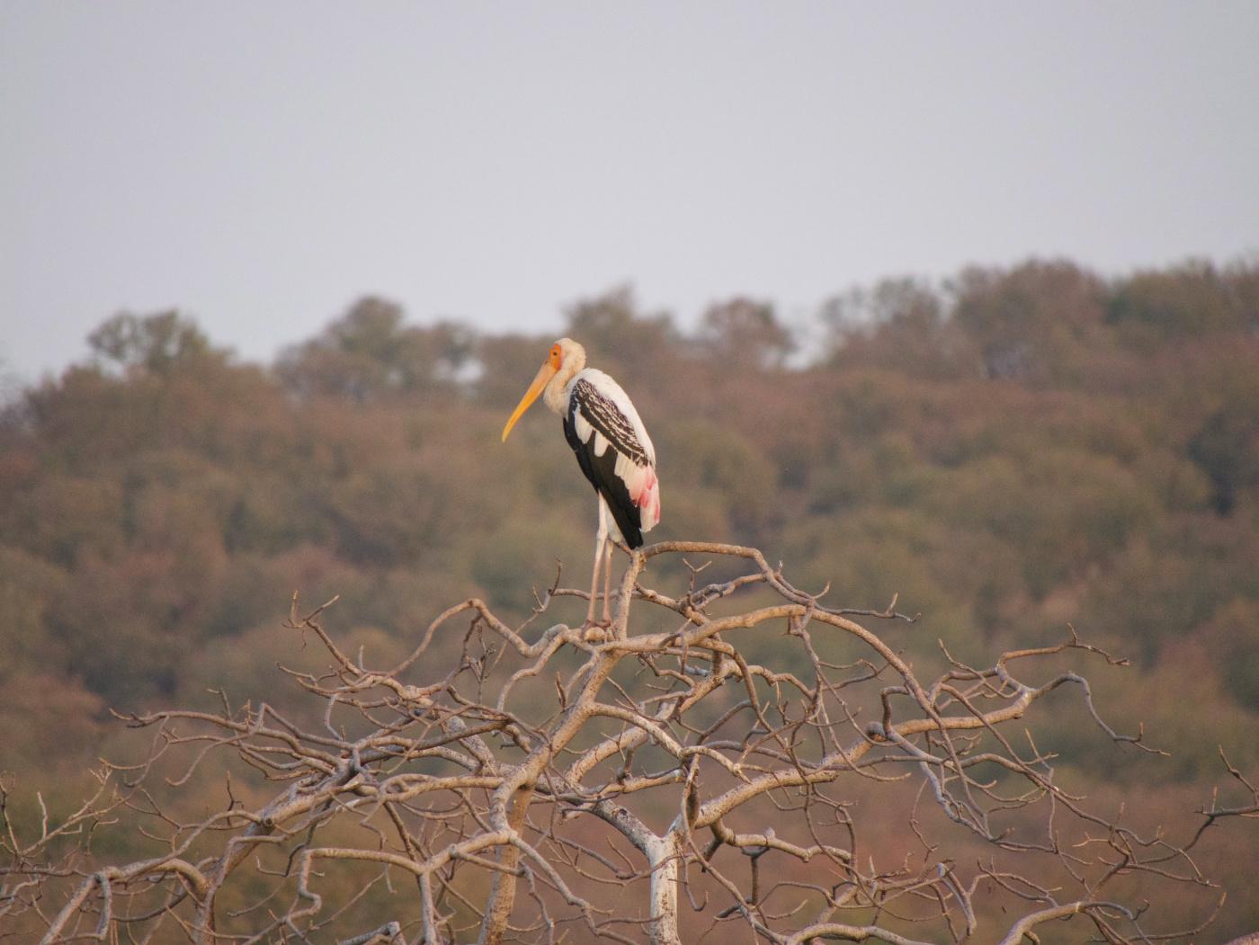 093-India-Ranthambore