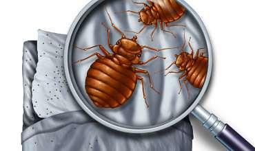 Bed Bugs Ann Arbor Control