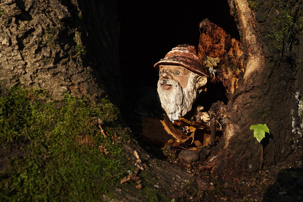 A gnome statue peers out from a tree cavity