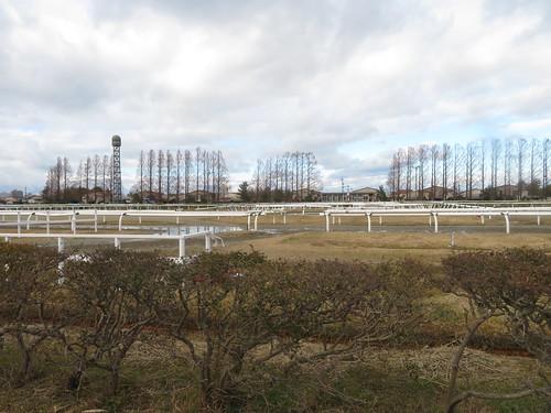 金沢競馬場の内馬場のホースリンク
