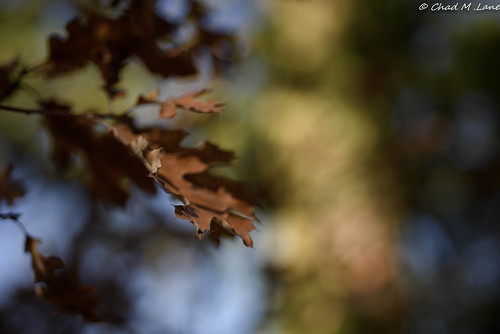 Pastel Fall Colors.